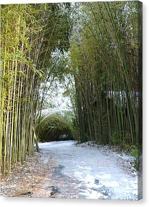 Path In Bamboo Field Canvas Print by Renee Trenholm