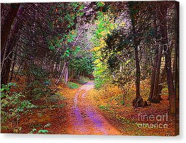 Path In The Woods Canvas Print by Anne Raczkowski