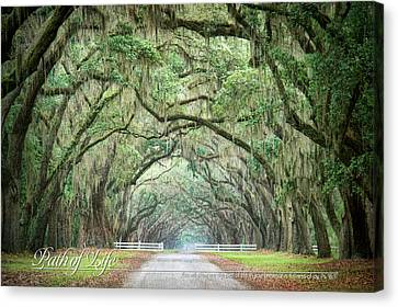 Path Of Life 1 Canvas Print by Mary Hershberger