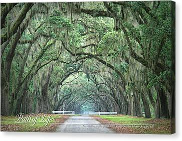 Path Of Life 2 Canvas Print by Mary Hershberger