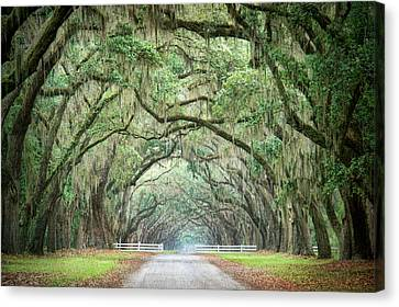 Path Of Life 3 Canvas Print by Mary Hershberger
