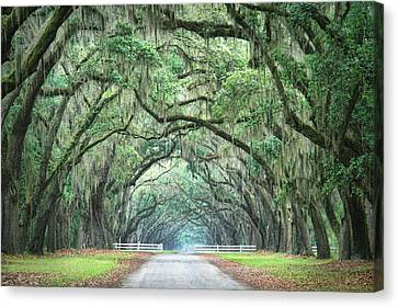 Canvas Print featuring the photograph Path Of Life 4 by Mary Hershberger