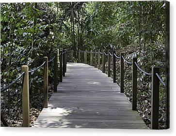 Path Through Rainforest Inside The Singapore Botanic Garden Canvas Print by Ashish Agarwal