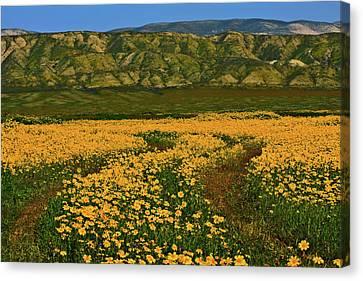 Path Through The Wildflowers Canvas Print
