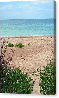 Pathway To The Beach Canvas Print by Sandi OReilly