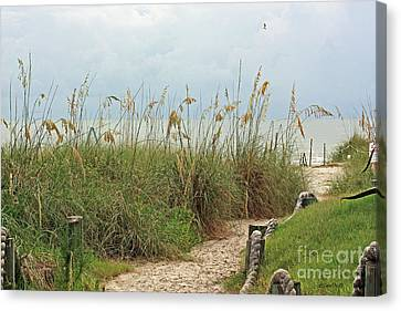 Pathway To The Gulf Canvas Print