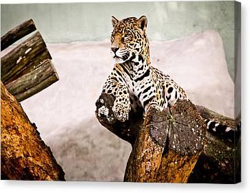 Patient Jaguar Canvas Print by Ezequiel Rodriguez Baudo