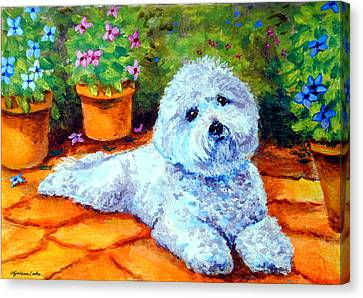 Patio Pal - Bichon Frise Canvas Print