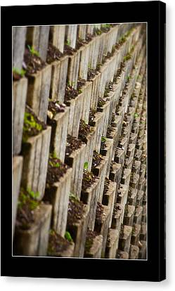 Pattern In The Carpark Canvas Print by Miguel Capelo