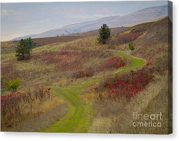 Paved In Green Canvas Print by Idaho Scenic Images Linda Lantzy