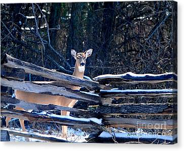 Canvas Print featuring the photograph Pea Ridge Battlefield Deer by Nava Thompson