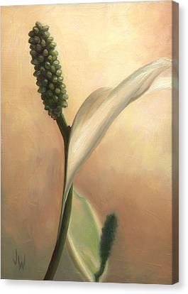 Peace Lily Canvas Print by Joe Winkler