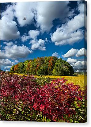 Peace Of Mind Canvas Print by Phil Koch