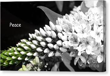 Peace Canvas Print by Sian Lindemann