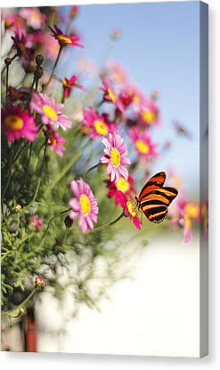 Peaceful Feeling Canvas Print