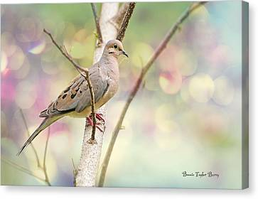 Peaceful Mourning Dove Canvas Print by Bonnie Barry