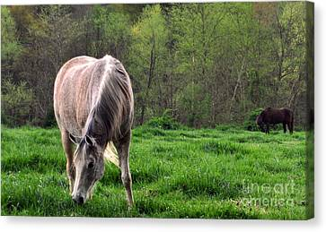 Canvas Print featuring the photograph Peaceful Pasture by Lydia Holly
