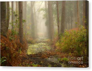 Peaceful Pathway Canvas Print