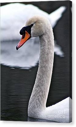 Peaceful Pond Canvas Print by Eric Chapman