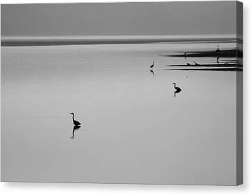 Peacful Heron Morning Canvas Print