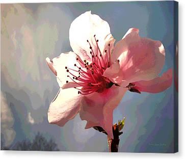 Peach Blossom Macro 2 Canvas Print by Joyce Dickens