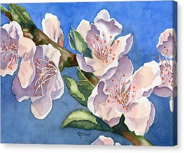 Peach Blossoms Canvas Print by Marsha Elliott