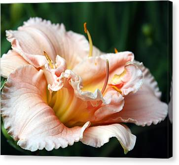 Peach Magnolia Love Affair  Canvas Print by Penny Hunt