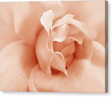 Peach Pastel Rose Flower Canvas Print by Jennie Marie Schell
