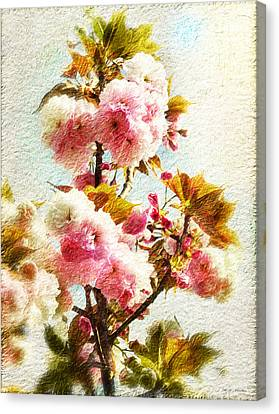Peach Tree Blossom Canvas Print by Heinz G Mielke
