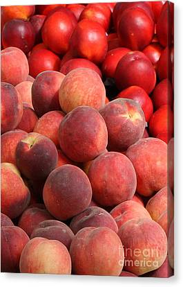 Peaches And Nectarines Canvas Print by Carol Groenen