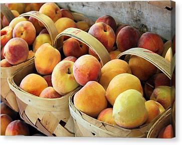 Peaches Canvas Print by Kristin Elmquist