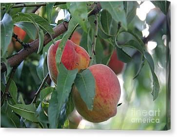 Peachy Morning Canvas Print by Yumi Johnson