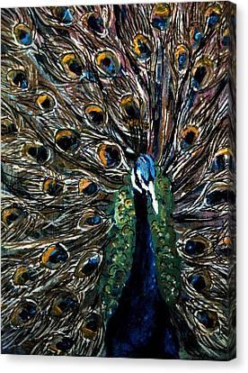 Peacock 2 Canvas Print by Amanda Dinan