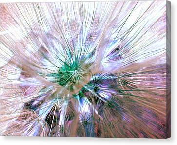 Peacock Dandelion - Macro Photography Canvas Print by Marianna Mills