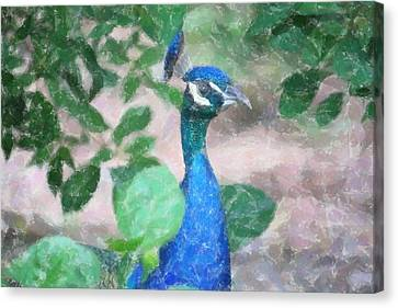 Canvas Print featuring the photograph Peacock by Donna  Smith