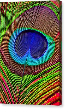 Peacock Feather Close Up Canvas Print by Garry Gay