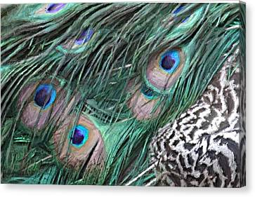 Canvas Print featuring the photograph Peacock Feathers by Donna  Smith