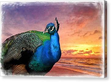 Peacock In Paradise Canvas Print by Debra and Dave Vanderlaan