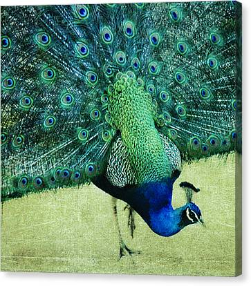 Peacock Pride Canvas Print