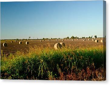 Peanut Bales In Field Canvas Print by Douglas Barnett
