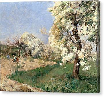 Pear Blossoms Canvas Print by Childe Hassam