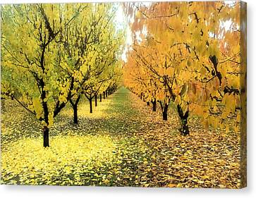Canvas Print featuring the photograph Pear Orchard In Fall by Katie Wing Vigil