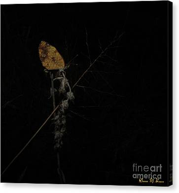 Pearly Crescentspot Butterfly Canvas Print by Donna Brown