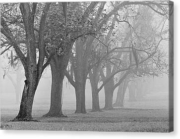 Pecan Grove Canvas Print