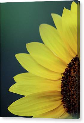 Canvas Print featuring the photograph Pedals Of Sunshine by Cathie Douglas