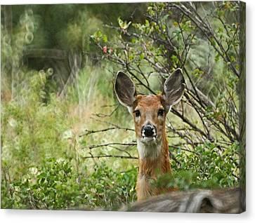 Fountain Creek Nature Center Canvas Print - Peek A Boo by Ernie Echols