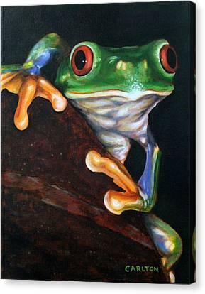 Peek-a-boo Frog Canvas Print by Brian Carlton