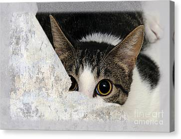 Peek A Boo I See You Too Canvas Print by Andee Design