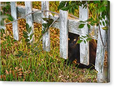 Peeking Though The Fence Canvas Print by Jeanne  Woods