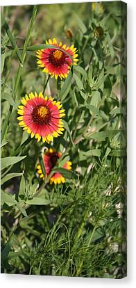 Canvas Print featuring the photograph Peeking Through by Lynnette Johns
